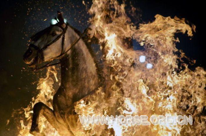 """西班牙:""""勇士""""骑马穿烈焰 庆传统节日"""