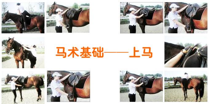 马术基础——上马
