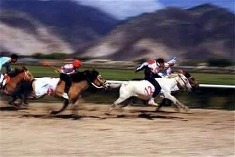 广西赛马盛会 南宁举行首届速度赛马两广交流赛