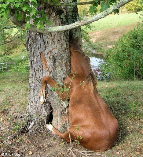 好奇小马脑袋卡树洞 农户操电锯解救
