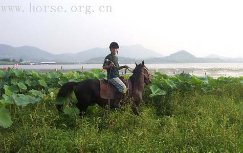 南方野骑特色:骑马摘莲、游泳