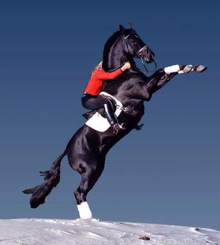 美女起扬,立马 - 美女骑马