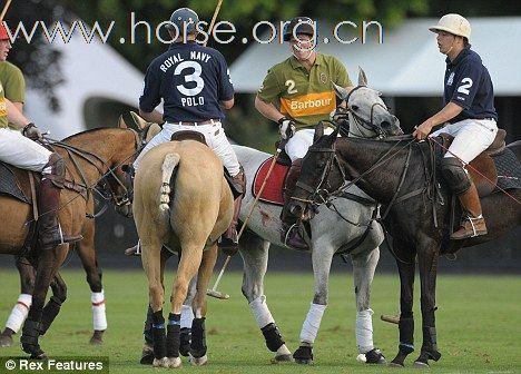 哈里王子马球赛刺伤马匹 被指虐待动物