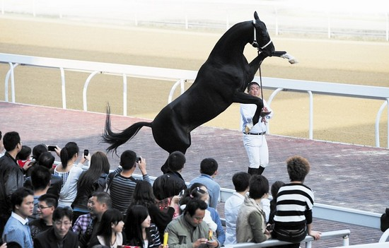 2012武汉国际赛马节激情扬鞭