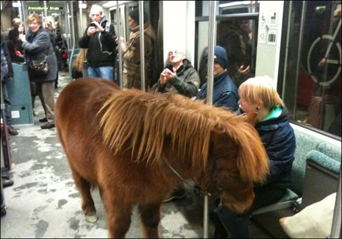 德国金发女子牵马进地铁引围观