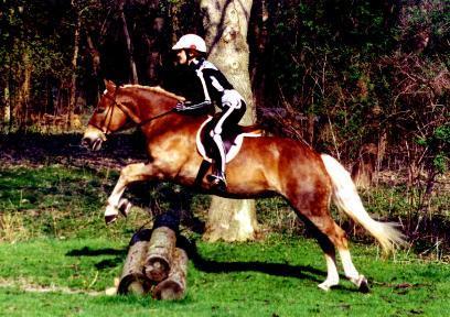 野外骑乘或障碍超越之前倾姿势