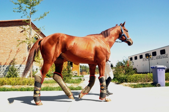 合肥马术节速度赛盛龙国际马会力夺三冠