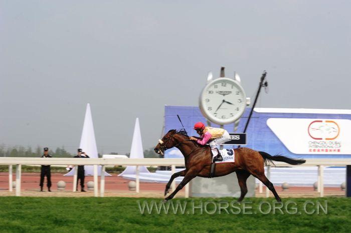 五十余匹阿联酋赛马竞速成都温江