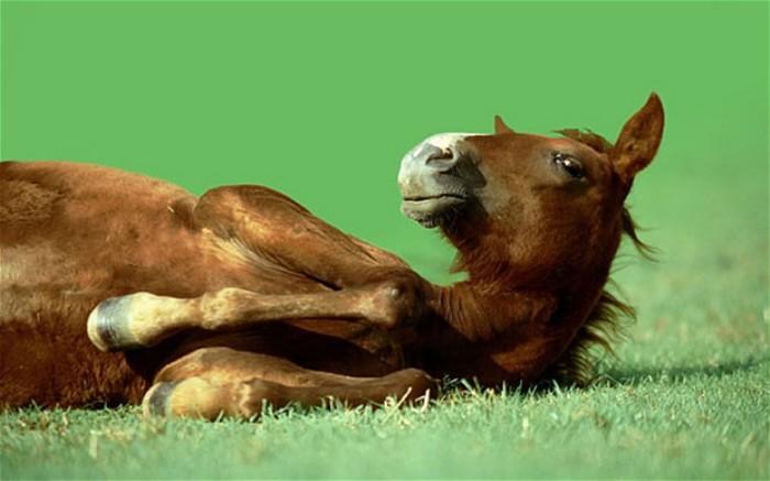 骑马时,马会觉得人很重吗?