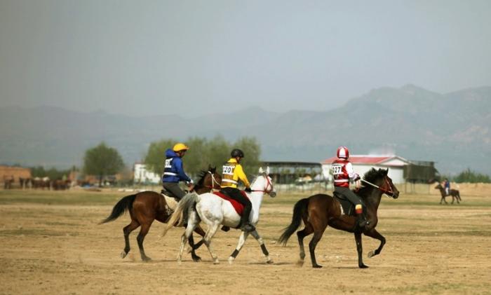闯入世界马术运动会 哪位华人选手积分第一?
