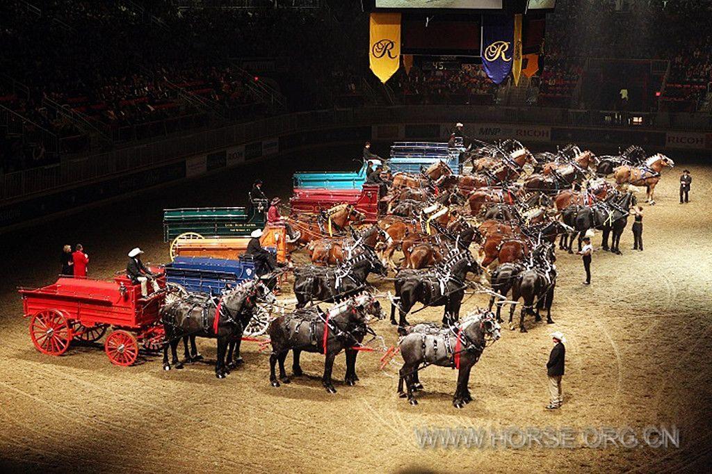 加拿大:多伦多举行年度皇家马展