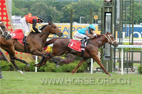 新加坡:驭马文化节 纯血马业界精英一致赞誉